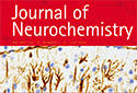 "BRI research featured on the front cover of ""Journal of Neurochemistry"""