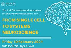 第11回 新潟大学脳研究所共同研究拠点国際シンポジウムをオンライン開催します
